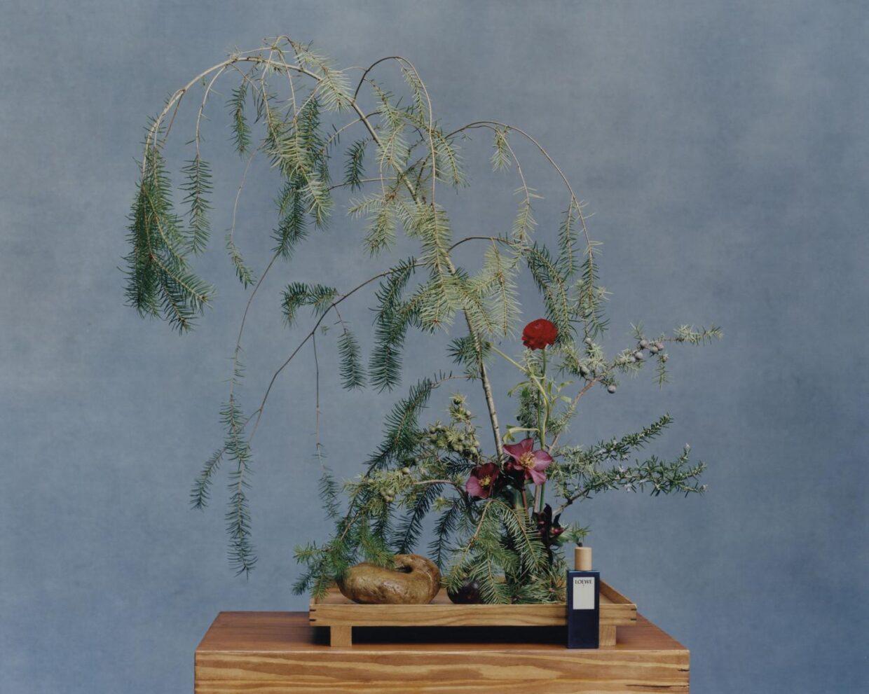 Bu görsel boş bir alt niteliğe sahip; dosya adı body3_loewe-perfumes-ikebana-tyler-loewe-stilllife-7-1240x991.jpg